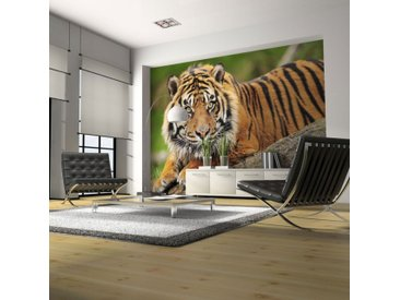 "Papier Peint ""Tigre de Sumatra"" - Paris Prix"