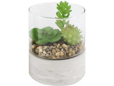 Plantes artificielles QUISTI