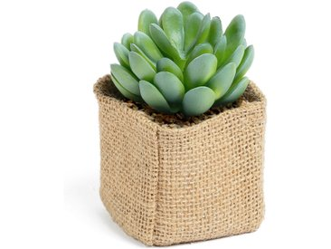 Kave Home - Plante artificialle Pachyphytum