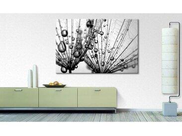 Impression sur toile Dandelion Seed
