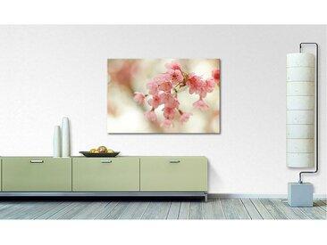 Impression sur toile Cherry Blossoms