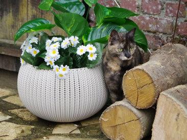 Pot + Cache pot CURVER aspect tricoté - Taille S - Beige