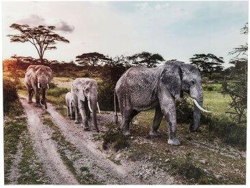 Tableau en verre Elephant Family 160x120cm Kare Design