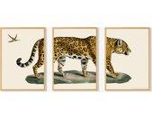Vintage Jaguar, lot de 3 illustrations encadrées, par Natural History Museum, format A2