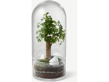 Green Factory, terrarium Jungle Rocket moyen