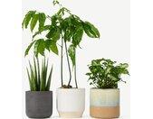 Bloombox Club, ensemble de 3 plantes avec pots, multicolore