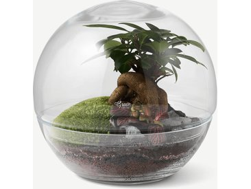 Green Factory, terrarium Forest Moon moyen