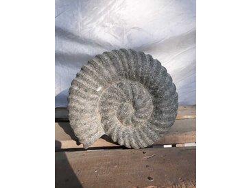 Sculpture coquille de nautilus en pierre volcanique 20 cm