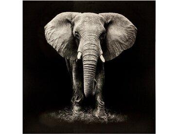 Toile imprimée Éléphant100x100