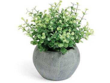 Plante eucaliptus Zelena