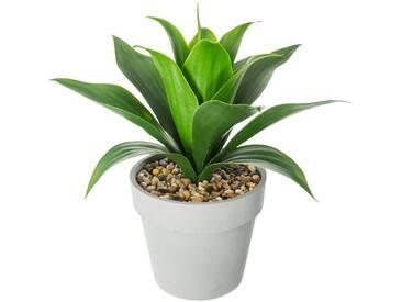Atmosphera - Aloe vera pot en ciment H34